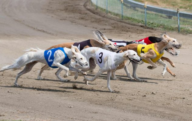 horse and greyhound racing