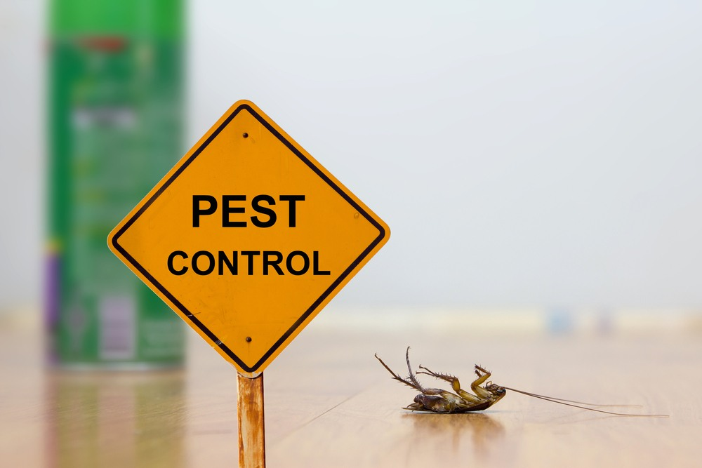 Reasons to use pest control services in London | Talk Business
